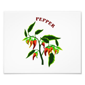 Pepper plant graphic with word pepper photographic print
