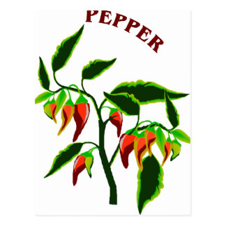 Pepper plant graphic with word pepper postcard