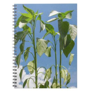 Pepper plant plug spiral note books