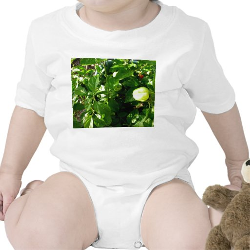 pepper plant with one green pepper baby bodysuit