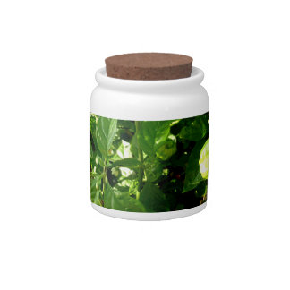 pepper plant with one green pepper candy jar
