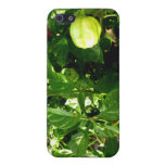pepper plant with one green pepper cover for iPhone 5