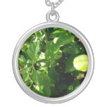 pepper plant with one green pepper pendants