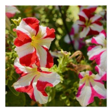 Art Themed Peppermint Flowers Poster