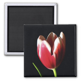 Peppermint Tulip Magnet