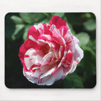 Peppermit Rose Mouse Pad