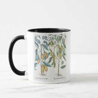 Peppers: 1.Piper Indicum filiquis flavis; 2.Piper Mug
