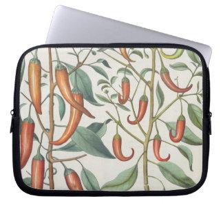 Peppers: 1.Piper Indicum maximum longum; 2.Piper I Laptop Sleeves