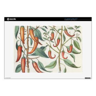 Peppers: 1.Piper Indicum maximum longum; 2.Piper I Decal For Laptop