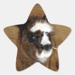 Pequeña alpaca del bebé - pacos del Vicugna Pegatina Forma De Estrella Personalizada
