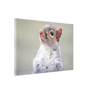 Pequeña ardilla gris suave y mullida linda impresiones en lienzo estiradas
