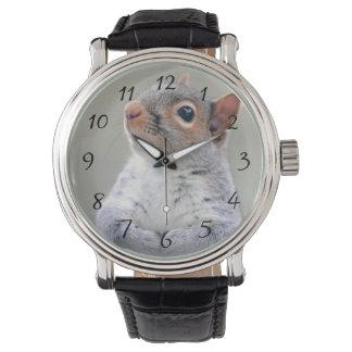 Pequeña ardilla gris suave y mullida linda relojes
