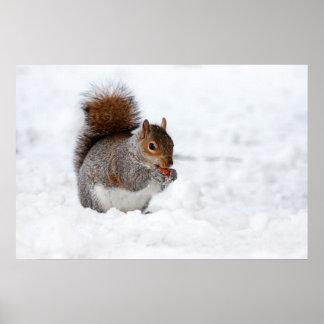 Pequeña ardilla marrón linda en nieve poster