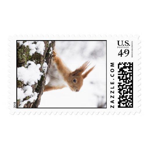 Pequeña ardilla sellos postales
