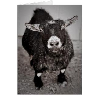 Pequeña cabra tarjeta de felicitación