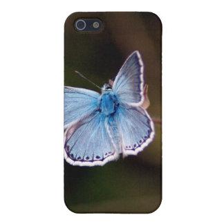 Pequeña caja azul del iPhone 4 de la mariposa iPhone 5 Cárcasas