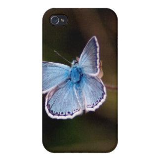 Pequeña caja azul del iPhone 4 de la mariposa iPhone 4 Fundas