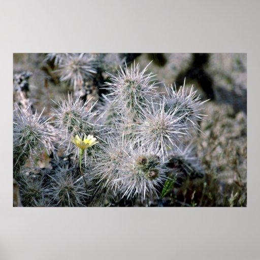 Pequeña flor en el cactus poster