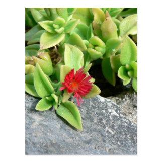 Pequeña flor roja postales