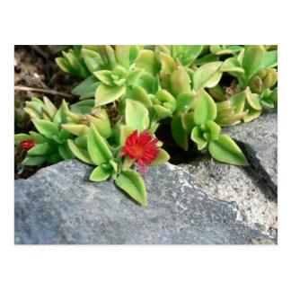 Pequeña flor roja tarjeta postal