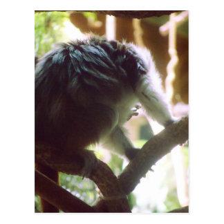 Pequeña foto linda del mono postal