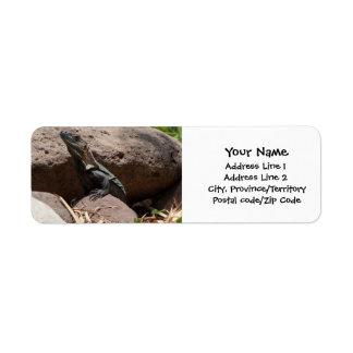 Pequeña iguana en las rocas etiqueta de remite