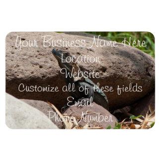 Pequeña iguana en las rocas iman de vinilo