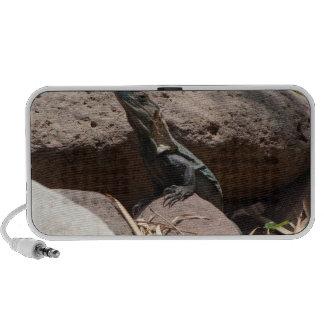 Pequeña iguana en las rocas; Ningún texto Portátil Altavoces