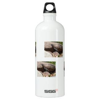 Pequeña iguana en las rocas; Ningún texto Botella De Agua