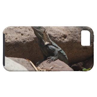 Pequeña iguana en las rocas; Ningún texto iPhone 5 Carcasa