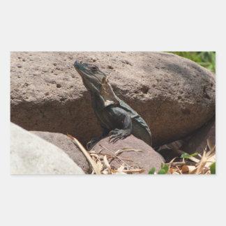 Pequeña iguana en las rocas; Ningún texto Pegatina Rectangular