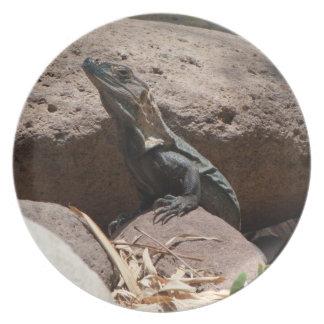 Pequeña iguana en las rocas; Ningún texto Plato De Cena