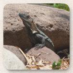 Pequeña iguana en las rocas; Ningún texto Posavasos De Bebidas