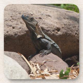 Pequeña iguana en las rocas; Ningún texto Posavasos De Bebida