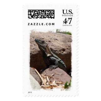 Pequeña iguana en las rocas; Ningún texto Sello