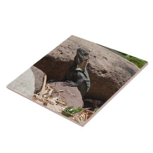 Pequeña iguana en las rocas; Personalizable Tejas Ceramicas