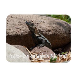 Pequeña iguana en las rocas; Personalizable Imanes