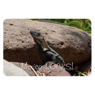 Pequeña iguana en las rocas; Recuerdo de México Imanes De Vinilo