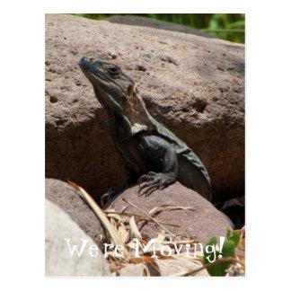 Pequeña iguana en las rocas tarjetas postales