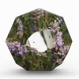 Pequeña mariposa blanca