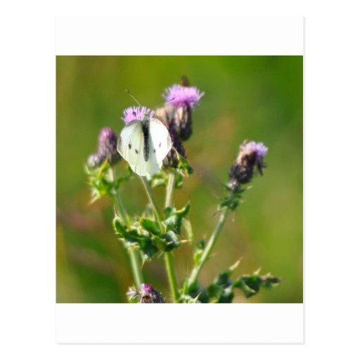 Pequeña mariposa blanca tarjeta postal