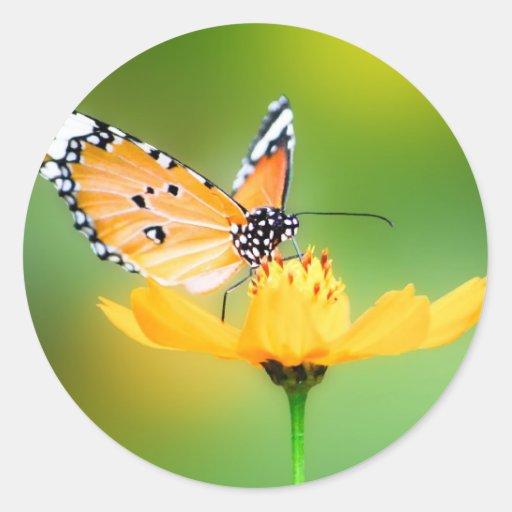 Pequeña mariposa bonita que se sienta en una flor pegatina redonda