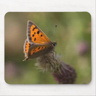 Pequeña mariposa de cobre alfombrillas de raton
