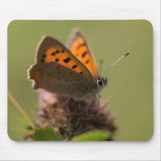 Pequeña mariposa de cobre mousepads