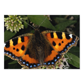 """Pequeña mariposa de concha, Arlesford, Hampshir Invitación 5"""" X 7"""""""