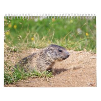 pequeña marmota calendario