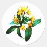Pequeña orquídea amarilla etiqueta redonda