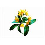 Pequeña orquídea amarilla postal