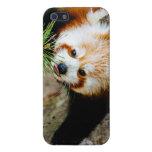 Pequeña panda roja con el helecho - fotografía ani