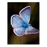 Pequeña postal azul de la mariposa